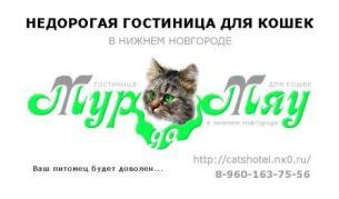 Приглашаем кошечек котов в том числе